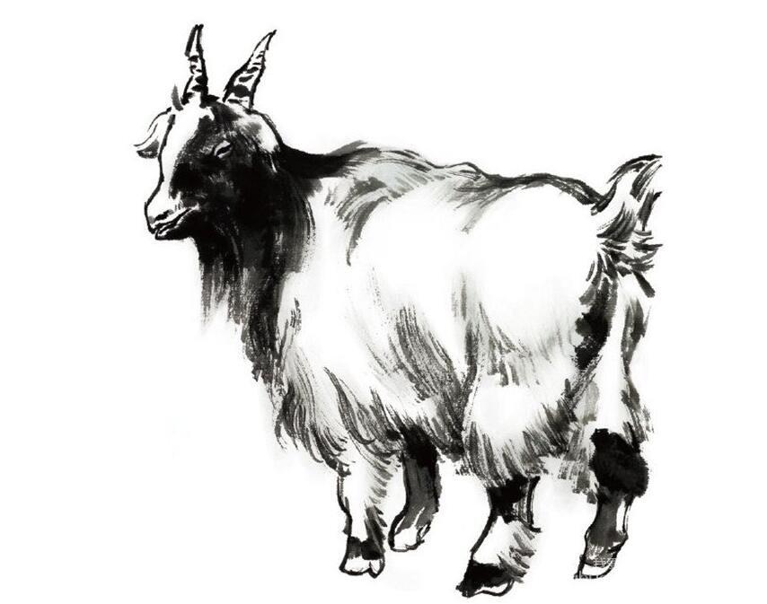 国画羊的绘画步骤