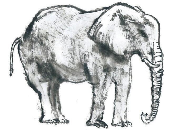 国画大象的绘画步骤