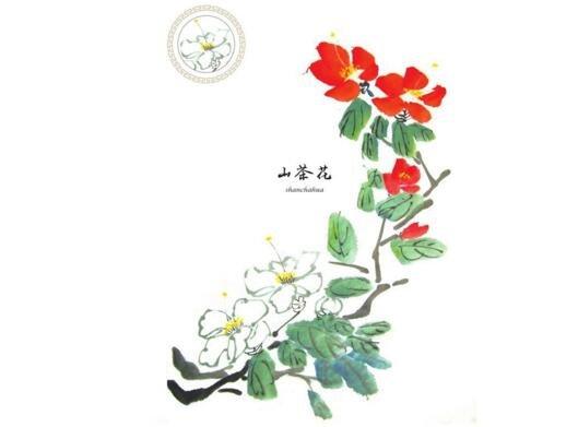 国画山茶花的绘画技法
