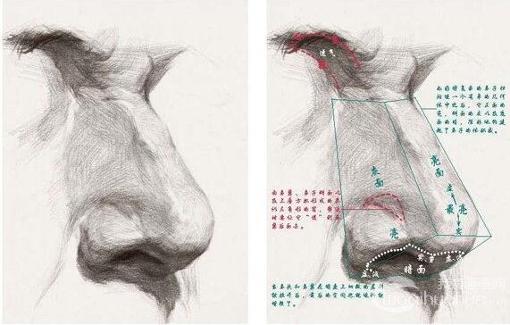 素描鼻子的绘画技法
