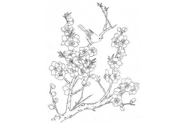 白描桃花鸟鸣的绘画步骤