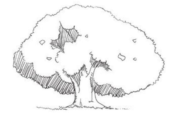速写树的立体感绘画技法