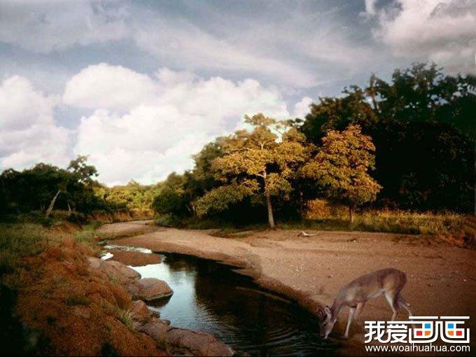 欧洲风景油画图片欣赏:小溪边饮水的小鹿_世界名画