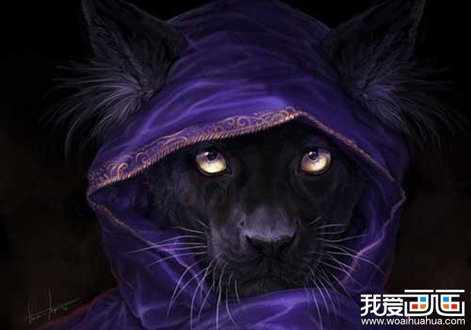 穿袍子的黑猫:动物插画高清图片