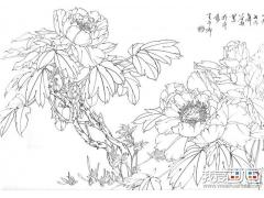 国画白描牡丹10副,王少卿白描牡丹花卉高清图片