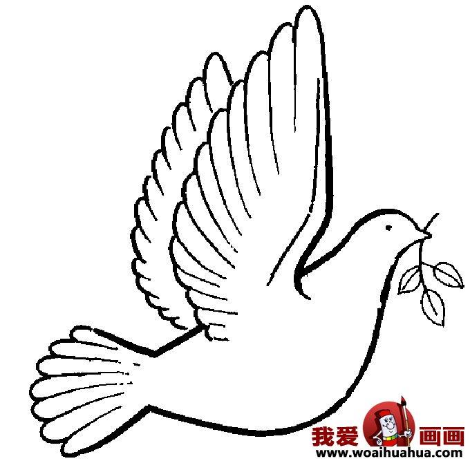 鸽子的简笔画-6张和平鸽简笔画图片
