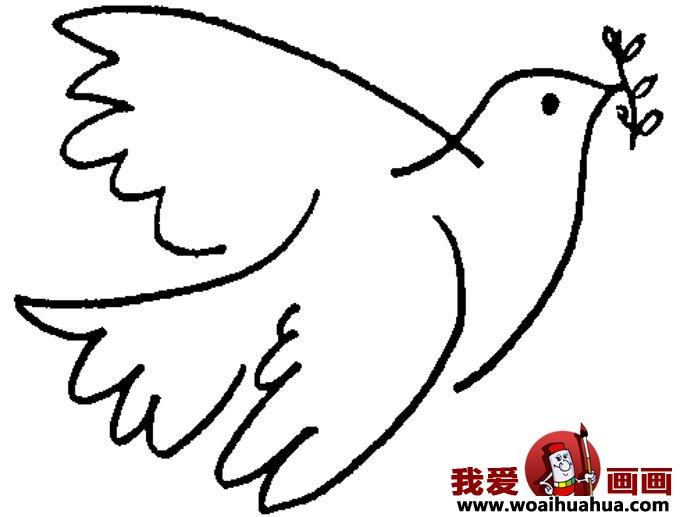 鸽子的简笔画-6张和平鸽简笔画图片(6)