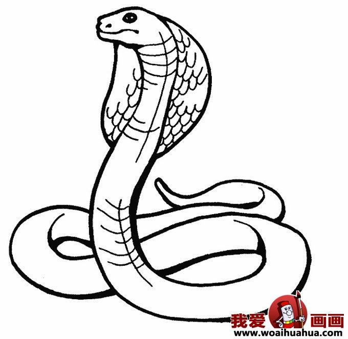 简笔画蛇-11张蛇的简笔画图片(3)