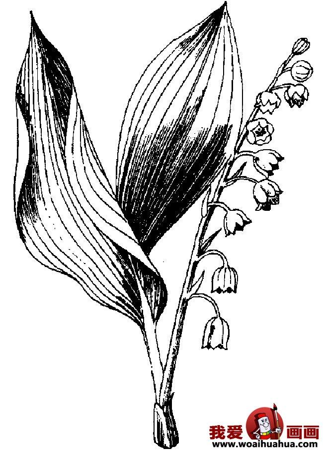 九种简笔画花卉植物图片欣赏(4)
