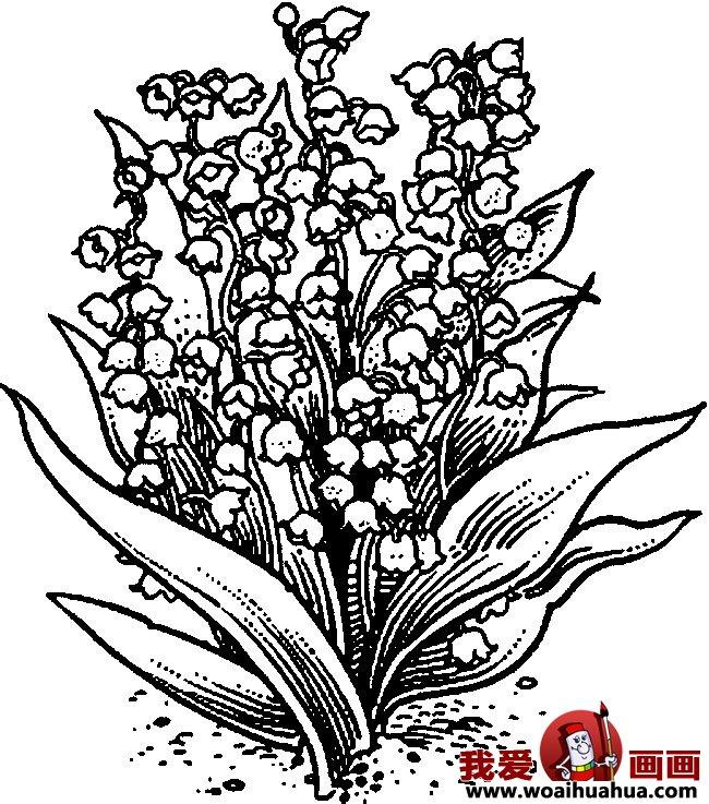 九种简笔画花卉植物图片欣赏 8