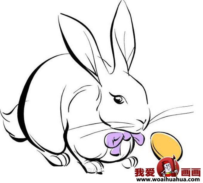 小兔子简笔画,兔子简笔画图片:写实兔子简笔