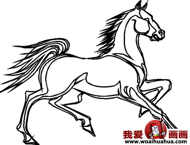 简笔画马,关于马的简笔画10副(2)图片