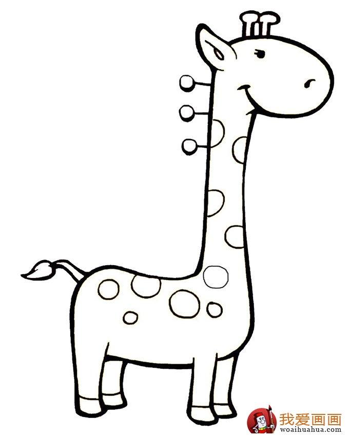 幼儿简笔画图片大全:卡通小动物超可爱(3)