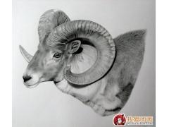 动物素描画:超级写实动物素描图片以假乱真