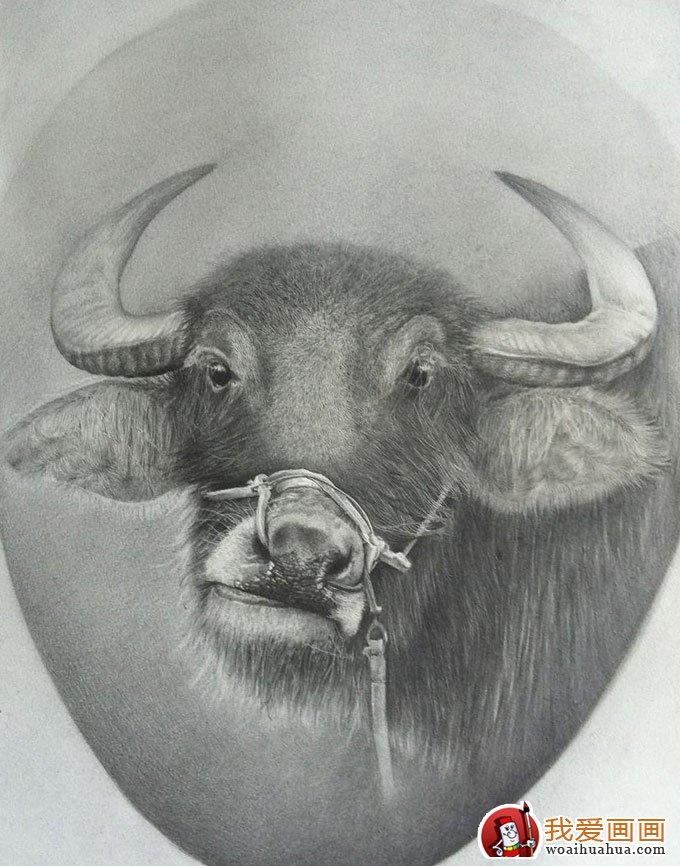 动物素描画:超级写实动物素描图片以假乱真(2)