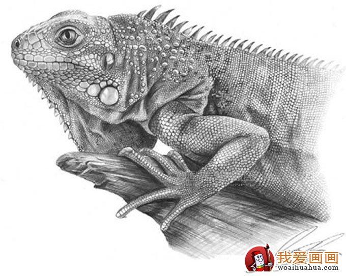 动物素描画:超级写实动物素描图片以假乱真(3)
