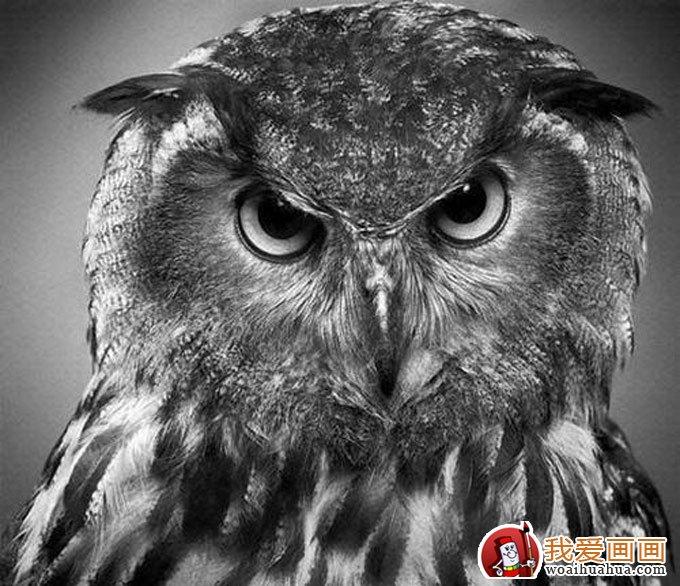 动物素描画:超级写实动物素描图片以假乱真(4)