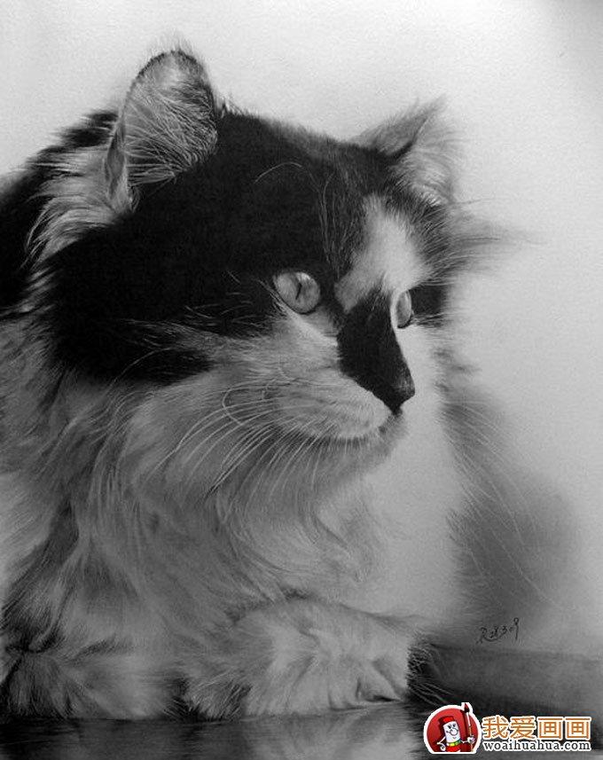 超写实动物素描画(六):猫