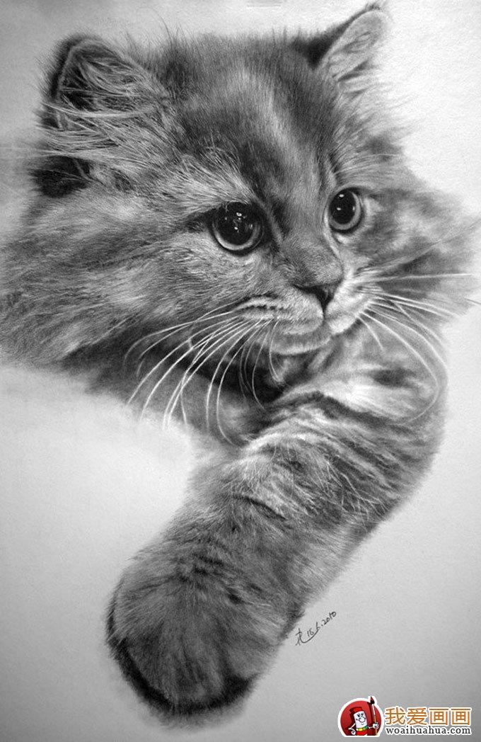 动物素描画:超级写实动物素描图片以假乱真(8)