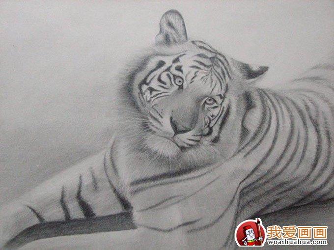 动物素描画:超级写实动物素描图片以假乱真(9)