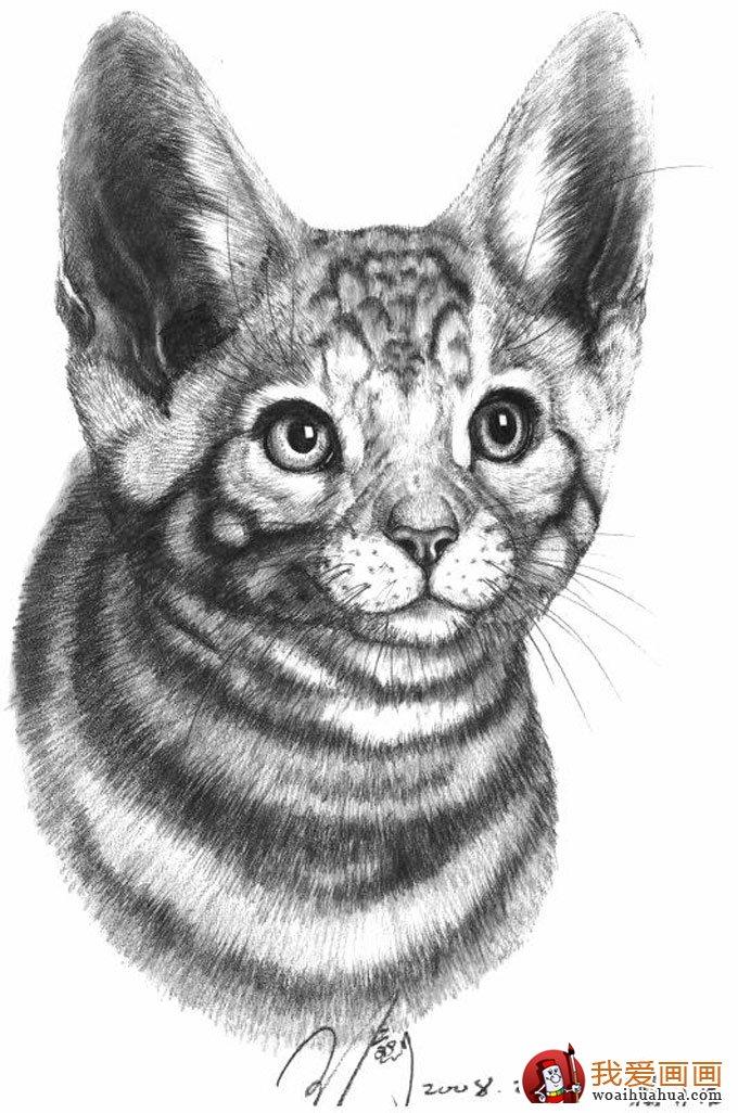动物素描画:超级写实动物素描图片以假乱真(10)