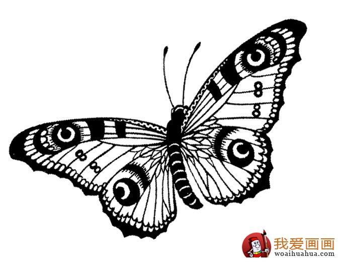 儿童简笔画蝴蝶,美丽的花蝴蝶简笔画图片 4