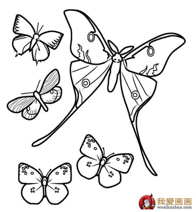 儿童简笔画蝴蝶,美丽的花蝴蝶简笔画图片 2
