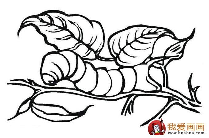 13副毛毛虫儿童简笔画:毛毛虫简笔画可爱图片(2)