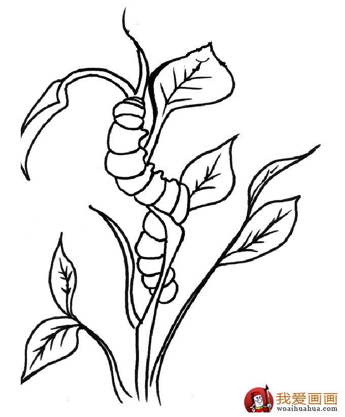 13副毛毛虫儿童简笔画:毛毛虫简笔画可爱图片(10)
