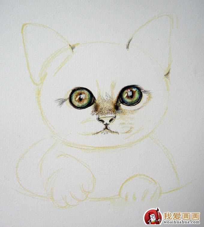 用彩色铅笔画猫咪的教程第(3)步:眼眶加深,瞳孔,高光,和眼睛的深绿色