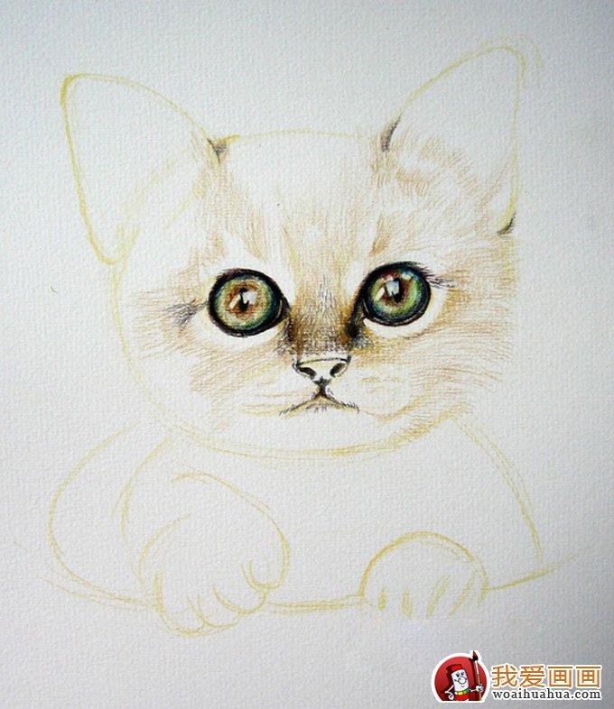 画猫咪的教程:彩色铅笔绘画可爱的小猫咪详细步骤(4)