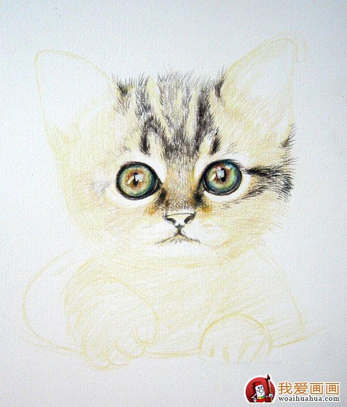画猫咪的教程:彩色铅笔绘画可爱的小猫咪详细步骤(6)