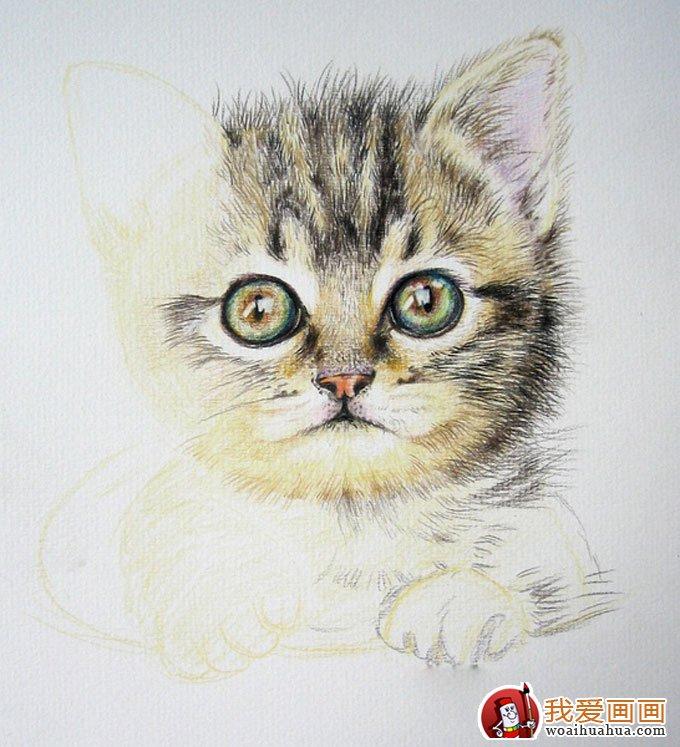用彩色鉛筆畫貓咪的教程第(7)步:完成鼻子部分的繪畫,突出嘴部部分