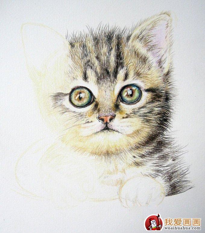 画猫咪的教程:彩色铅笔绘画可爱的小猫咪详细步骤(8)