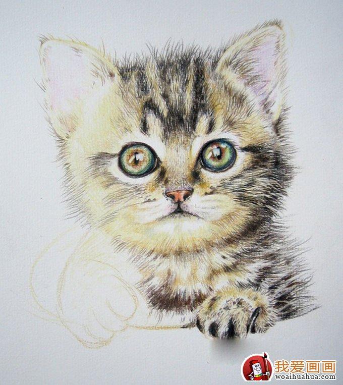 画猫咪的教程:彩色铅笔绘画可爱的小猫咪详细步骤(9)
