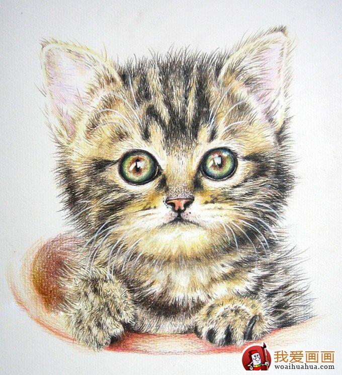 画猫咪的教程:彩色铅笔绘画可爱的小猫咪详细步骤