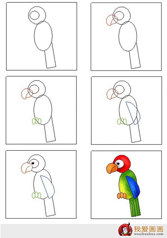 教你画鹦鹉 儿童简笔画鹦鹉的绘画和填色步骤