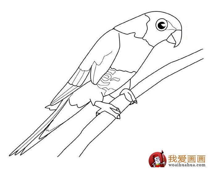 可爱的鹦鹉简笔画图片四副(3)