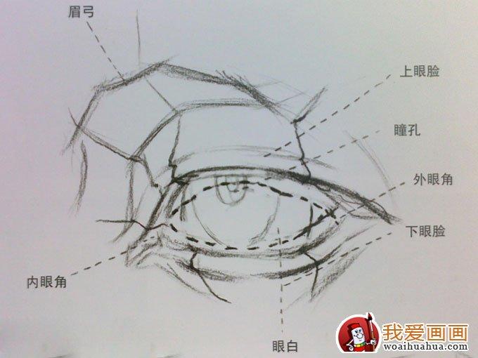 素描眼睛的画法 素描眼睛结构解析及写生图文步骤图片