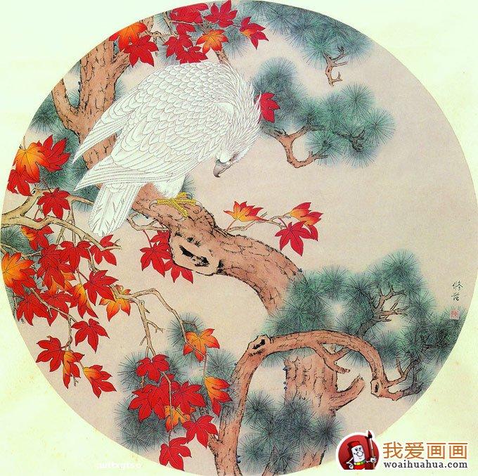 各种松树的工笔国画图片及画法(3)