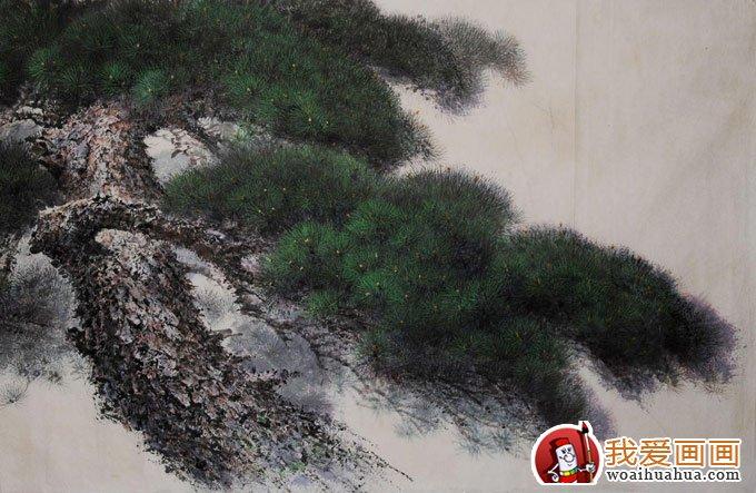 各种松树的工笔国画图片及画法(5)