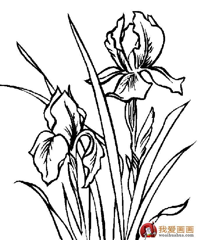 简笔画花卉大全,各种植物花儿简笔画图片26副(上)(5)-植物花卉