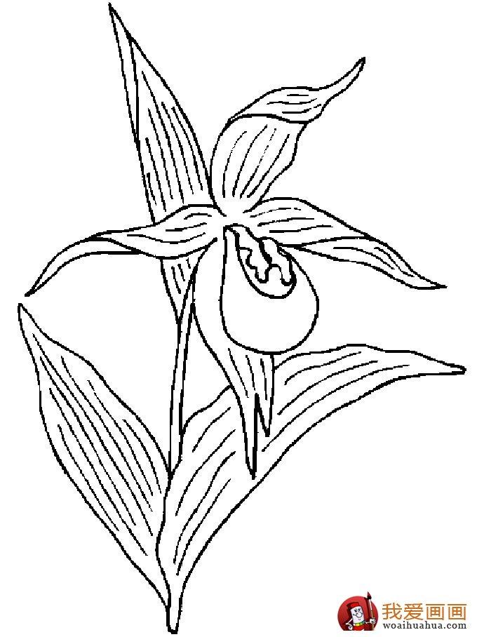 简笔画花卉大全,各种植物花儿简笔画图片26副(上)(6)