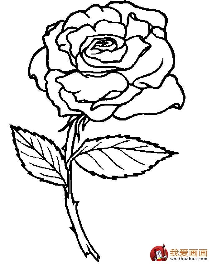简笔画花卉大全,各种植物花儿简笔画图片26副 上 7