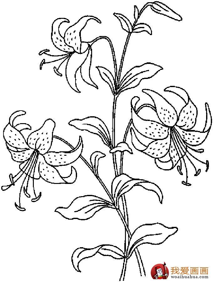 简笔画花卉大全,各种植物花儿简笔画图片26副 上 9图片