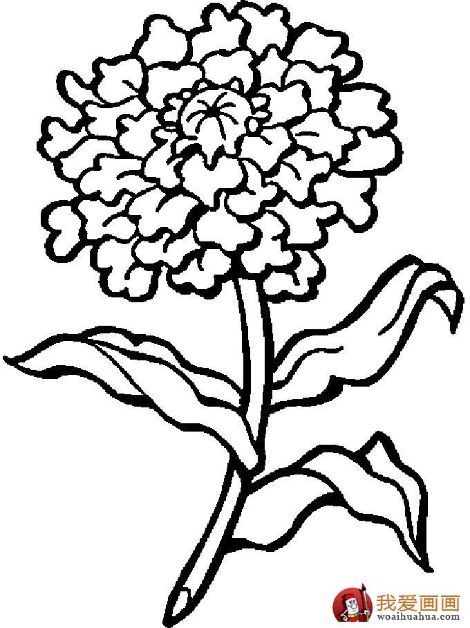 简笔画花卉大全,各种植物花儿简笔画图片26副 上 12