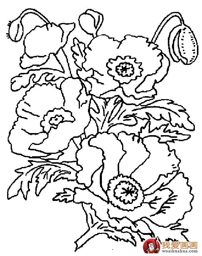 学画画 儿童画教程 简笔画 > 简笔画花卉大全,各种植物花儿简笔画图片