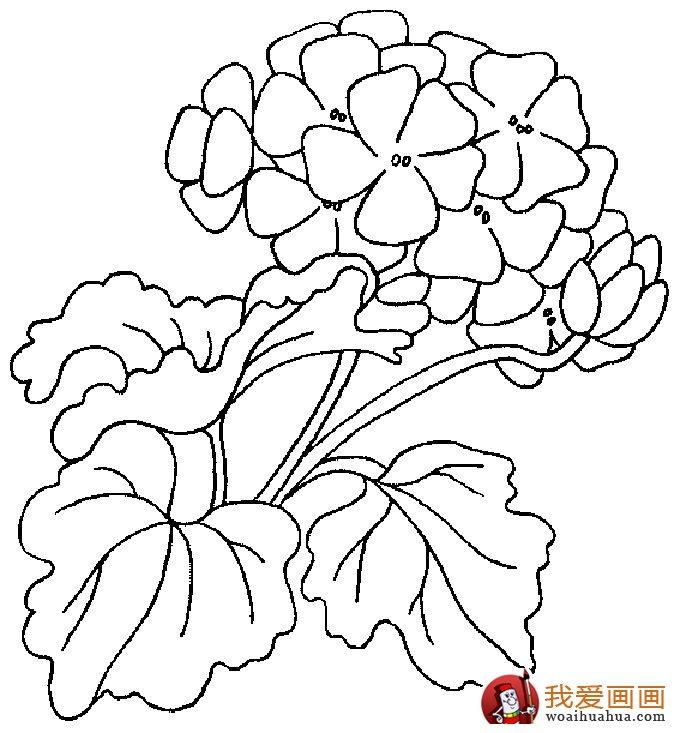 简笔画花卉大全,各种植物花儿简笔画图片26副 下 8