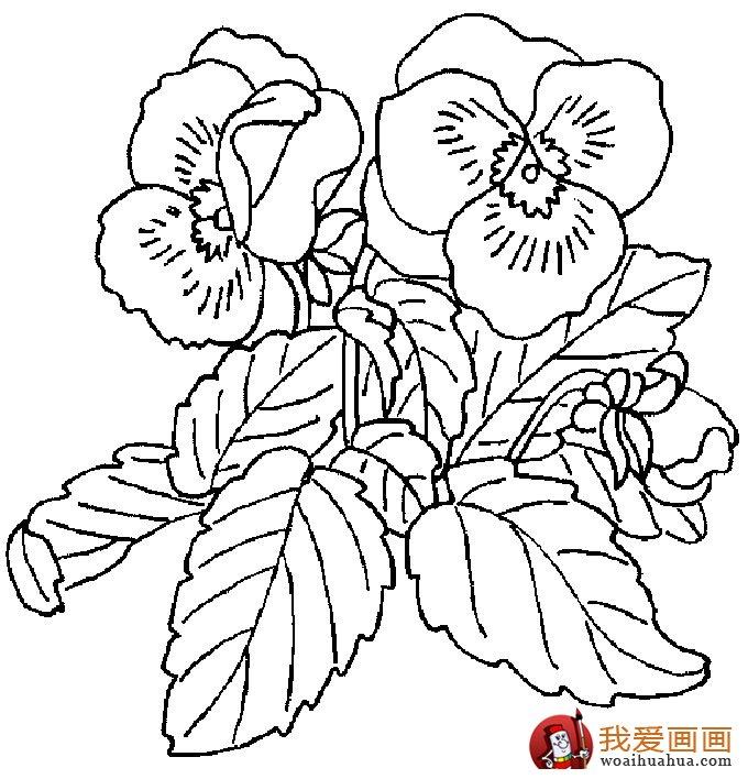 简笔画花卉大全,各种植物花儿简笔画图片26副 下 9
