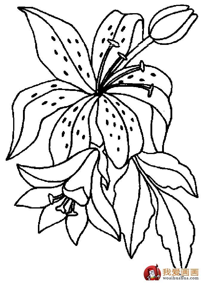 简笔画花卉大全,各种植物花儿简笔画图片26副(下)(10)